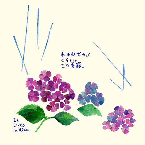 m63-01.jpg